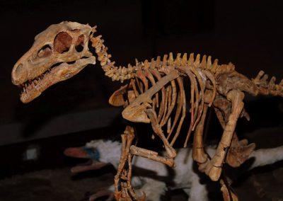 Musée des dinosaures à Espéraza