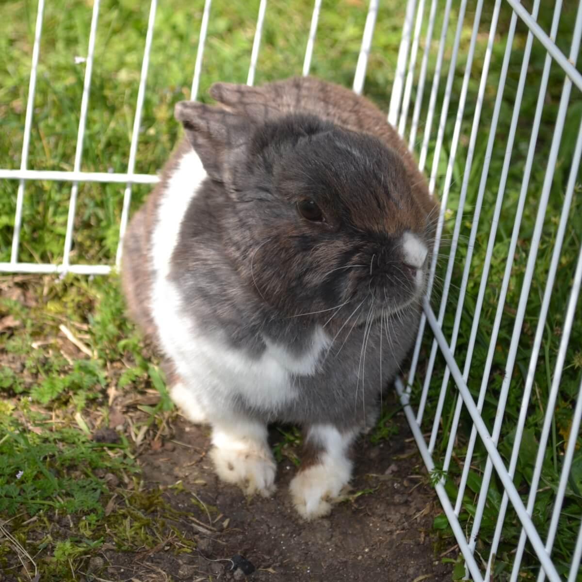 Lapinou het konijn van Domaine Las Brugues, de kindvriendelijke accommodatie in Zuid-Frankrijk