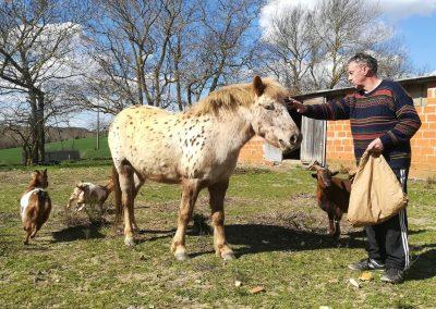 Nuage, le poney du Domaine Las Brugues